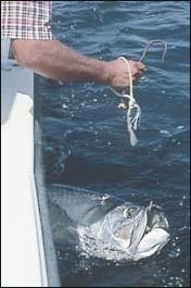 Florida now requires a $50 tag if you are going to kill a tarpon.